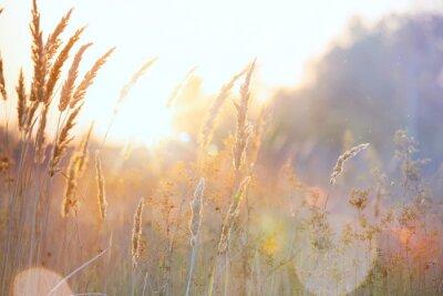 Sticker Kunst Herbst sonnigen Natur Hintergrund