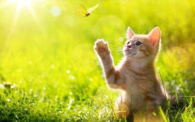 Sticker Kunst Junge Katze / Kitten Jagd ein Marienkäfer mit Gegenlicht