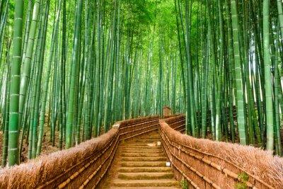 Sticker Kyoto, Japan Bambuswald