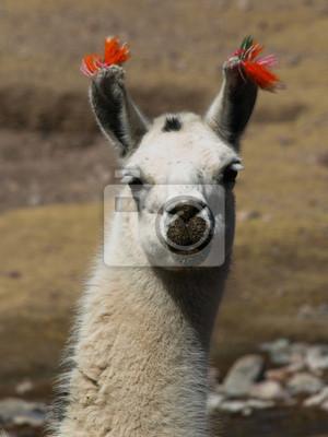 Sticker Lama-Porträt
