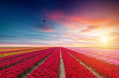 Sticker Landschaft mit Tulpen, traditionelle niederländische Windmühlen und Häuser in der Nähe des Kanals in Zaanse Schans, Niederlande, Europa