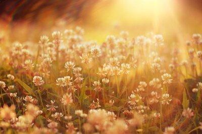 Sticker Landschaft Sommer Hintergrund Sonnenblumen Rays