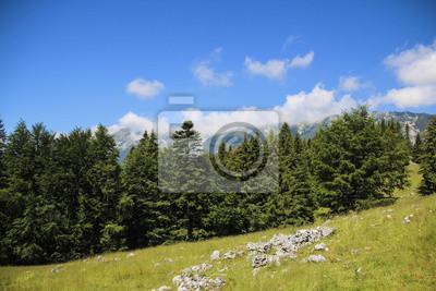 Landschaft von grünen Wiesen, blauer Himmel, Wald und weißen Wolken