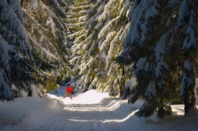 Langlaufen: junger Mann Skilanglauf an einem schönen sonnigen Wintertag
