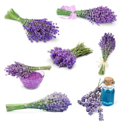 Sticker Lavendel, Blume, Lavendelfarbig.