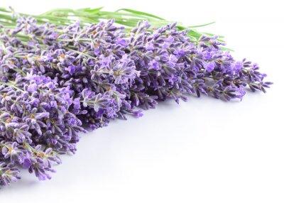 Sticker Lavendel Blumen Hintergrund.