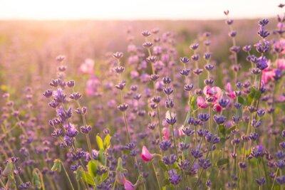 Sticker Lavendelfeld.