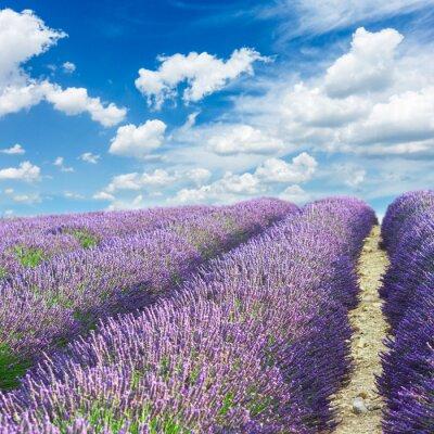 Sticker Lavendelfeld