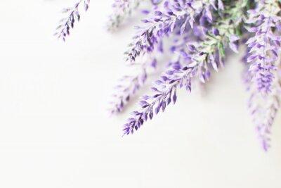 Sticker Lavender branch on a white background