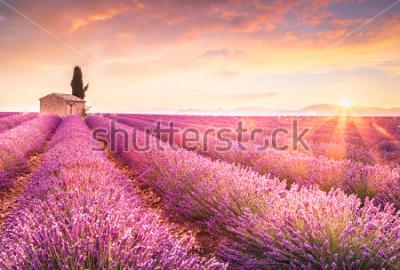 Sticker Lavender fields at sunrise near Valensole, Provence, France