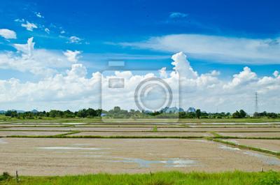 Leere Reisfeld und blauer Himmel