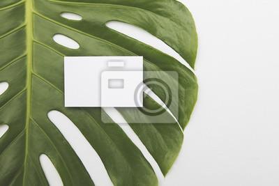 Leere weiße Visitenkarte auf einem grünen tropischen Blatt Hintergrund
