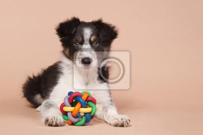 Legen Border Collie Welpen mit einem Spielzeug