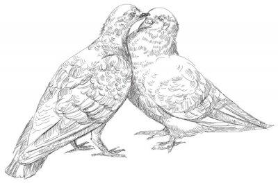 Liebhaber Tauben küssen in Vektor
