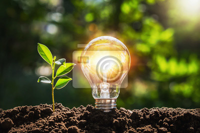 Sticker lightbulb tree with sunlight on soil. concept save world and energy power