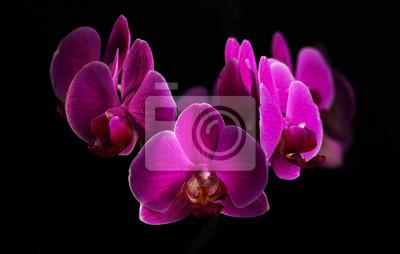 Sticker Lila Orchidee auf schwarz