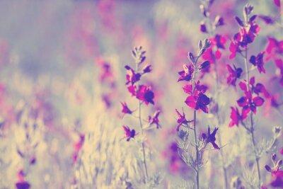 Sticker lila Wildblumen