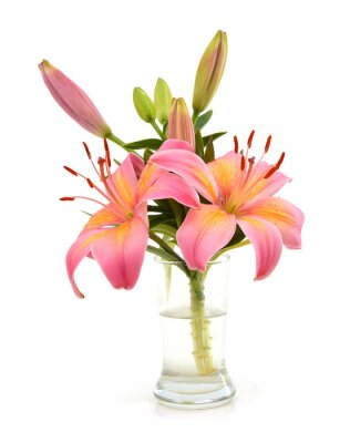 Lily flower in vase isolated white