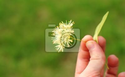 Line-Blüte