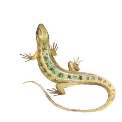 Sticker Lizard. Aquarell-Abbildung im Vektor-