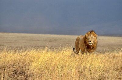 Sticker Lonely Lion