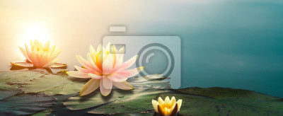 Sticker  lotus flower in pond