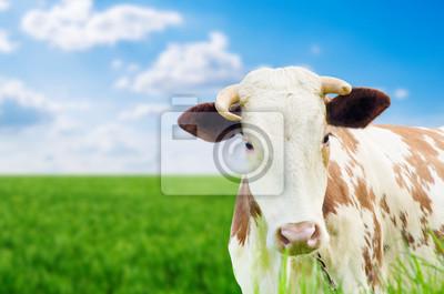Lustige Kuh auf einer grünen Sommerwiese. Unscharfen Hintergrund