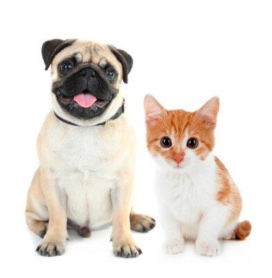 Sticker Lustige Mops Hund und kleine rote Kätzchen auf weiß isoliert