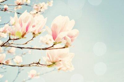 Sticker Magnolia Blüte mit Sonne Fackel. Flachen Bereich der Tiefe.