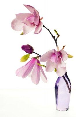 Sticker Magnolia Jane Blüten