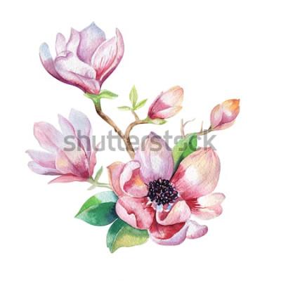 Sticker Magnolien Blumentapete malen. Hand gezeichnete Aquarellblumenillustration. Dekoratives natürliches Element der Blume. Weinlesekunst watecolour Hintergrund.
