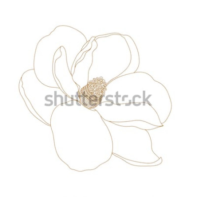 Sticker Magnolienblume, Draufsicht, lokalisiert auf Weiß Grafische Hand gezeichnete Magnolienblumen. Vector.Magnolia-Blumenzeichnung und -skizze mit Schwarzweiss-Strichzeichnungen.