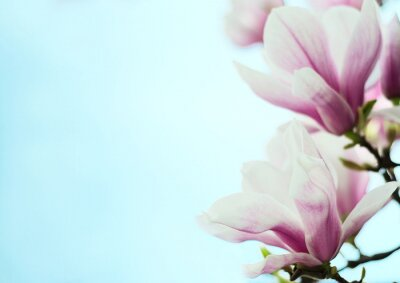 Sticker Magnolienblumen auf einem Hintergrund des blauen Himmels