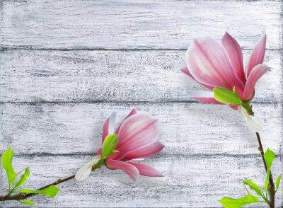 Sticker Magnolienblumen auf Hintergrund der schäbigen hölzernen Planken