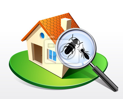 Maison - Termiten capricornes