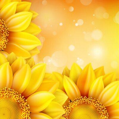 Sticker Makro SunFlower Hintergrund. EPS 10