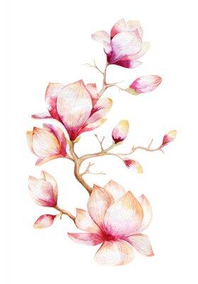 Sticker Malerei Magnolia Blume Tapete. Hand gezeichnet Aquarell mit Blumen