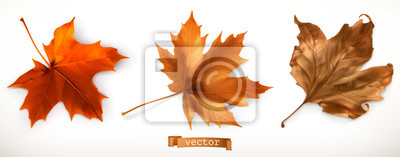 Sticker Maple leaf. 3d realistic vector icons