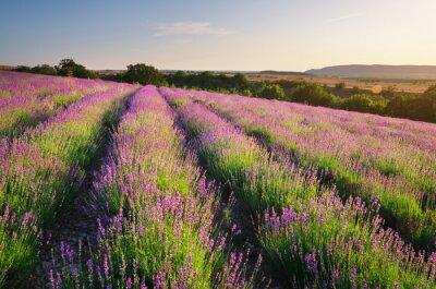 Sticker Meadow von Lavendel.