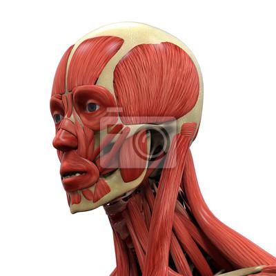Menschliches gesicht anatomie notebook-sticker • wandsticker ...