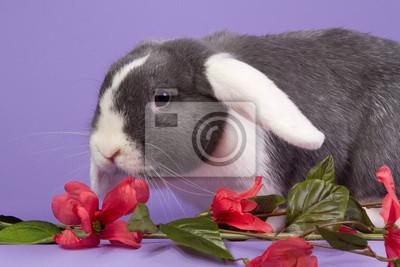 Mini-lop Kaninchen mit rosa Blumen