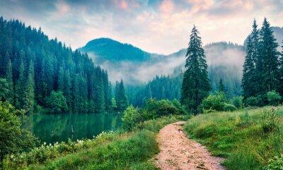Sticker Misty morning scene of Lacu Rosu lake. Foggy summer sunrise in Harghita County, Romania, Europe. Beauty of nature concept background.