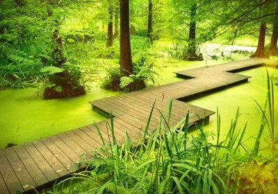 Sticker Moderne Fußweg oder gangplank über einem Teich im Wald. Alte Bäume stehen in einem Moor oder Sumpf im Wald. Sonnenstrahl und glattes Licht fallen durch die Baumkronen.