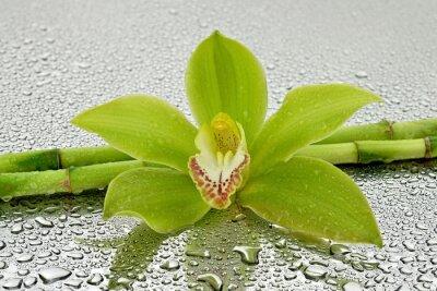 Sticker Mokra orchidea z bambusem