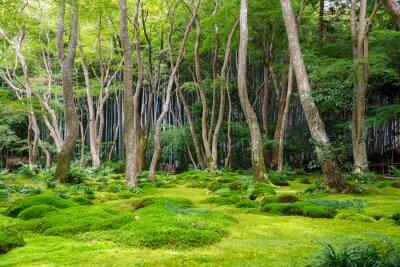 Sticker Moss Garten Blick in Arashiyama, Kyoto