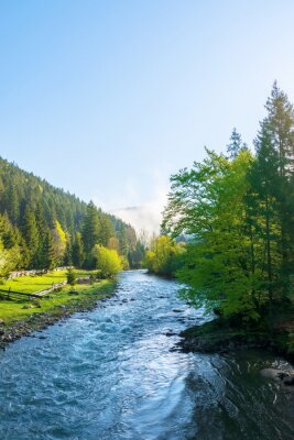 mountain river on a misty sunrise. fantastic nature scenery with fog rolling above the trees fresh green foliage on the shore in the distance. beautiful countryside landscape in morning light