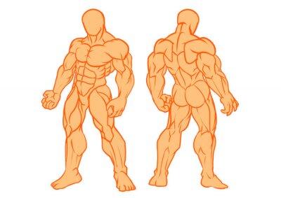 Muskulöser Mann, vorbildliche Vorderansicht und hintere Ansicht, Vektor, Farbe, Illustration