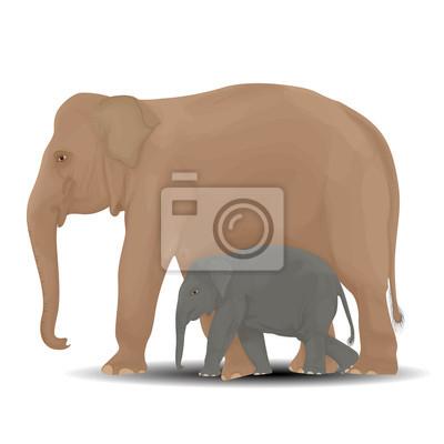 Mutter und Baby-Elefanten.