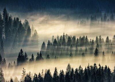 Nadelwald in nebligen Bergen