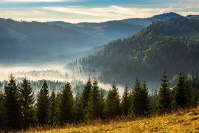 Nadelwald in nebligen rumänischen Bergen bei Sonnenaufgang